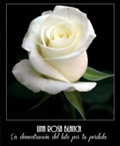Una rosa en memoria de tu ser querido